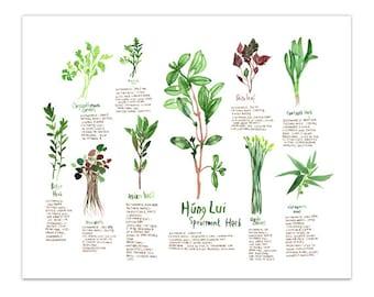 Botanical illustration, Vietnamese medicinal herbs, Watercolor herb painting, Kitchen print, Food art, Kitchen wall art, 8X10 kitchen poster