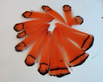 Lady Amherst pheasant tippet orange Feathers for facinators earrings fly tying crafts 10 pk