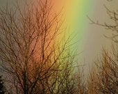 """5x7 Nature Inspired Photo Greeting Card or Print--Get Well Soon--#128--""""Heavenly Glow"""" Rainbow With Trees in Elephant Swamp Nature Trail"""