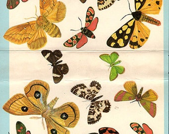 1950s Butterfly Prints, Vintage Antique Book Plate prints,  moths plate, butterflies nature art illustrations