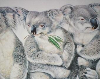 Koalas/METRO ZOO EXHIBIT/Vintage/Green Trim, Oak Frame/Print/Poster/Framed Art
