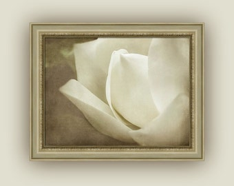 Soft Dreamy White Southern Magnolia Bloom in Sepia Tones, Cream Brown Minimalist Ethereal Magnolia Flower Art,  Fine Art Photography Print