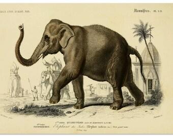 Elephant Print, Wall Art, Elephant Poster, Gift Idea, African Safari Decor Animal Print, Giant Elephant Illustration