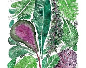 The Types of Kale Watercolor Art Print Garden Kitchen Illustration