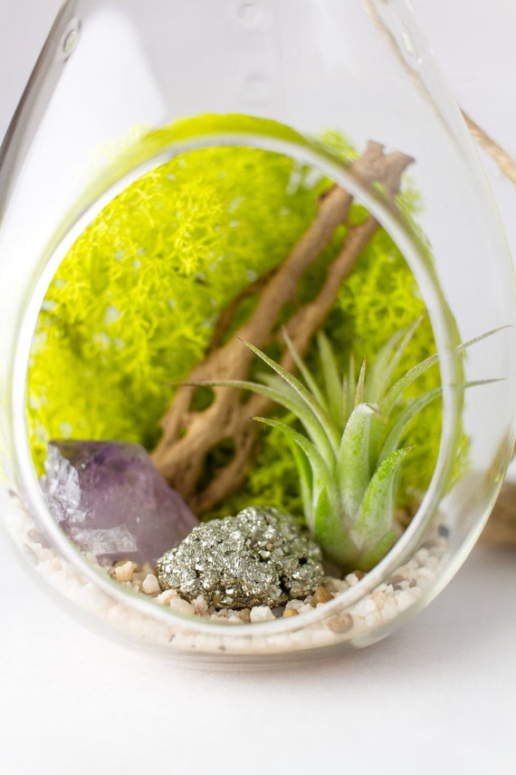Hanging Teardrop Terrarium Amethyst Crystal Point with Pyrite || DIY Kit || February Birthstone