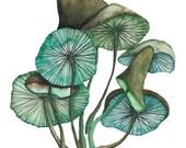 Postcard Mushroom, Illustrated Postcard, Aquarel, Pencils and Pen