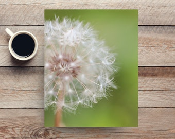 dandelion wall art - dandelion photography - macro photography - photo of a white dandelion - bedroom living room home decor - floral nature