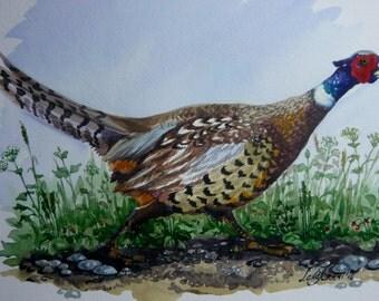Pheasant Original watercolour A4 unframed signed