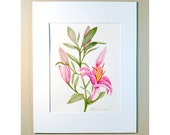 Pink Asiatic Lilly Watercolor Painting, Original, Pinks And Greens, In 11x14 Ready To Frame Matting