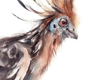 Art print of Curious Bird, Art Print, Watercolor Painting of Bird, Hoatzin Bird Painting, wall art