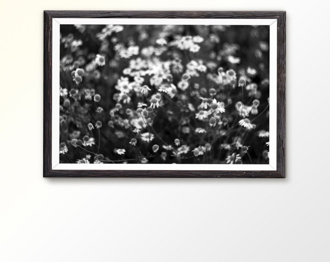 Instant photography art Printable instant art Black and White Photography Black and white flower photo Macro Photo Nature Photo Home decor