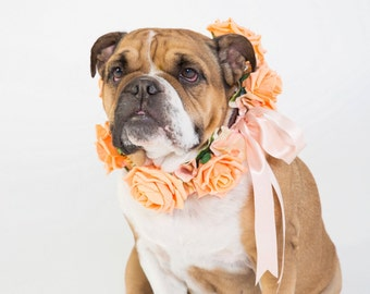 Peach Rose - Flower Dog Collar for Weddings - peach, apricot