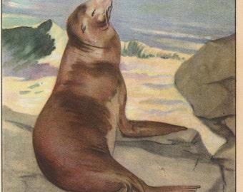 1926 Sea Lion Antique Print