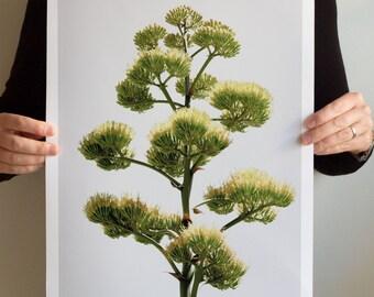 Art Print SS2016 Collection: Efflorescence 2901, Landscape California, Northern California