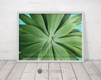 Succulent Art, Plant Prints, Succulent Wall Decor, Plant Printable Art, Green Printable Art, Plant Photo, Green Leaves Decor, Green Wall Art