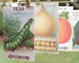 Vintage Seed Packet Cards Postcards Garden Vegetables Peas Farmers Market Spring Graphics by Cavallini Papers Snail Mail Paper Stationery