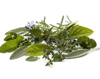 Fragrance Oil - Basil Sage Mint - for Soaps, Candles and B&B Products