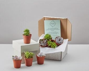 Succulent Selection Box