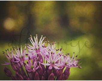 Purple Flower Photography. Flower Photography. Flower Photo. Flower Print. Botanical Print. Nature Photography. Fine Art Photography.