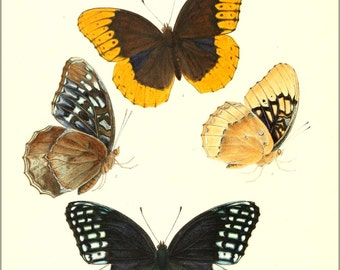 24x36 Poster . Butterflies By William Edwards 1872
