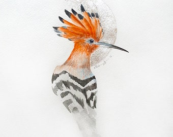 The hoopoe.