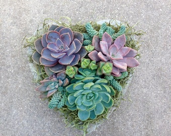 SUCCULENT HEART PLANTER Thank You Gift, Birthday, Get Well, Bridal, Sympathy,Bereavement, Succulent Planter