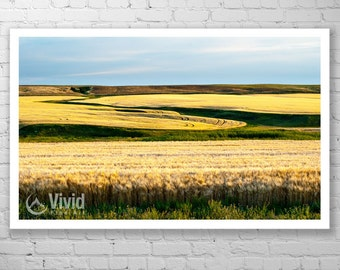 Wheat field photography, golden wheat field, Saskatchewan art, gold and blue, framed photography, matted picture, 11x17 12x20, 8x10 artwork