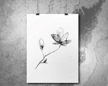 Magnolia flower, ink drawing. Print on archival matte fine art paper