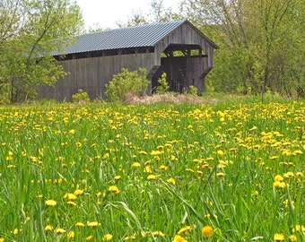 "VT covered bridge, VT artifact, Spring in VT, gray covered bridge, field of dandelions, for nature lovers,Title: ""Bordering Nature's Carpet"""