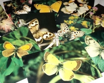 Vintage butterfly postcards - Butterfly prints - Butterfly photography - Vintage nature prints - Nature photography card set