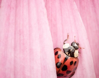 CANVAS ART: Ladybug Print, Girls Bedroom Decor, Nursery Wall Art, Bathroom Wall Decor, Pink Wall Decor, Pink Nursery Decor