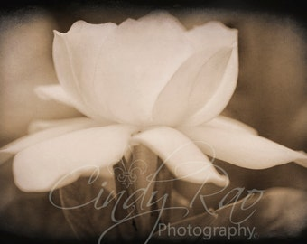 Flower, Photography, Print, Affordable, Under 10 Dollars, 8x10, Gardenia, Macro, Soft, Floral, Sepia,
