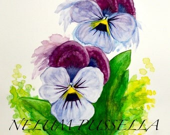 Pansy Flowers-Giclee print of Watercolor painting