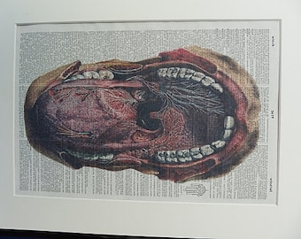 Anatomy Mouth and Tongue Dictionary Print No.331, mouth poster, anatomy art, tongue, medical poster, medical gift, the heart, medical school