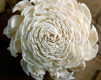 12 pack Sola Flowers, Mums, 2.25 inch Sola Flowers