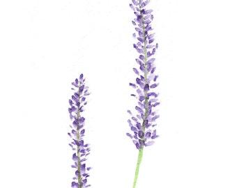 Lavender Watercolor Print. Home Decor. Lavender Print.