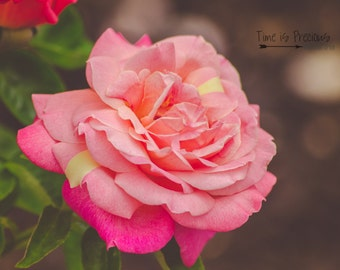 Pink Rose Photography,Rose Print,Flower PhotographyRose Print,Nature Photography,5x7,8x10,11x14,Wall Art, Nursery Art,UNFRAMED
