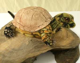 Recovered Box Turtle Shell with Felted Body