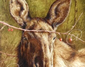 original oil painting, moose, wildlife, animal, fine art, nature, forest, scenery, hunting, western, Jan Brown