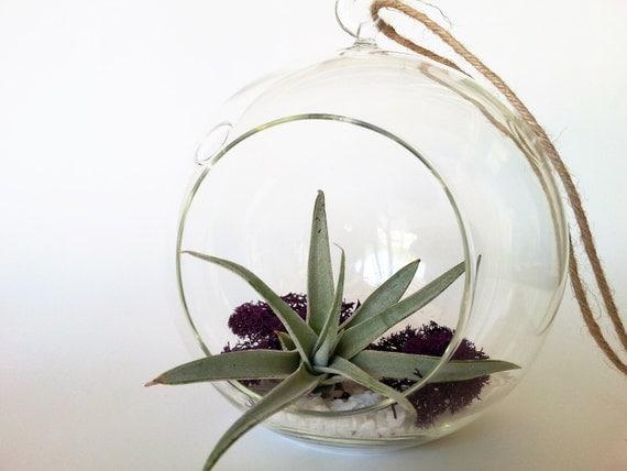 Air plant hanging glass terrarium kit gift ideas for her gift for Indoor plant gift ideas
