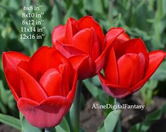 Tulip, Tulip Photo, Macro Digital, Tulip Photography, Botanical Photo, Digital Photo, Living Room Decor,  Instant Download