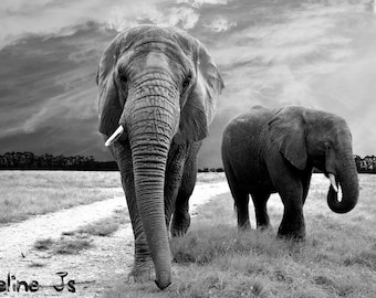 Elephant picture - black and white / elephant picture LIMITED EDITION