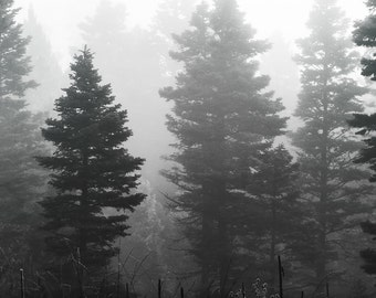 Black and White Photography, Tree Photography, Nature Photography, Fine Art Photography, B&W Photography, Fog Photography, Mystical, Print