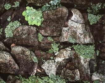 Lichen Photograph (4x4)