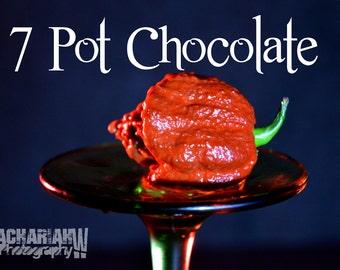 7 Pot Douglah (Chocolate) 15+ Seeds