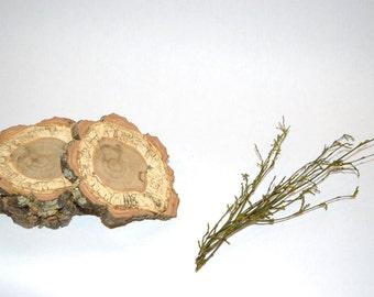 Spalted oak coasters
