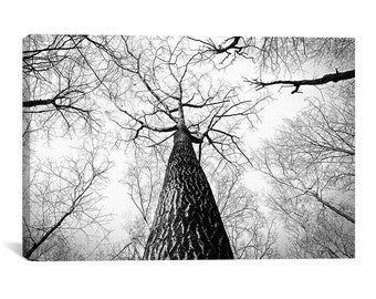 Black/White Trees Artistic Forest Canvas Print - Nature Wall Art, BW Scenic Canvas Decor, Modern Art