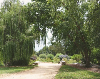 Weeping Willow Garden Print Green Path Wall Art Nature Print Peaceful Living Room Garden Home Decor Countryside Bedroom Art Tree Photo