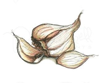 Garlic Print, Southern Art, Kitchen Print, Vegetable Print, Illustration