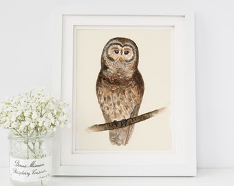 Owl Watercolor Painting Print 8x10 Woodland Animal Nursery Decor